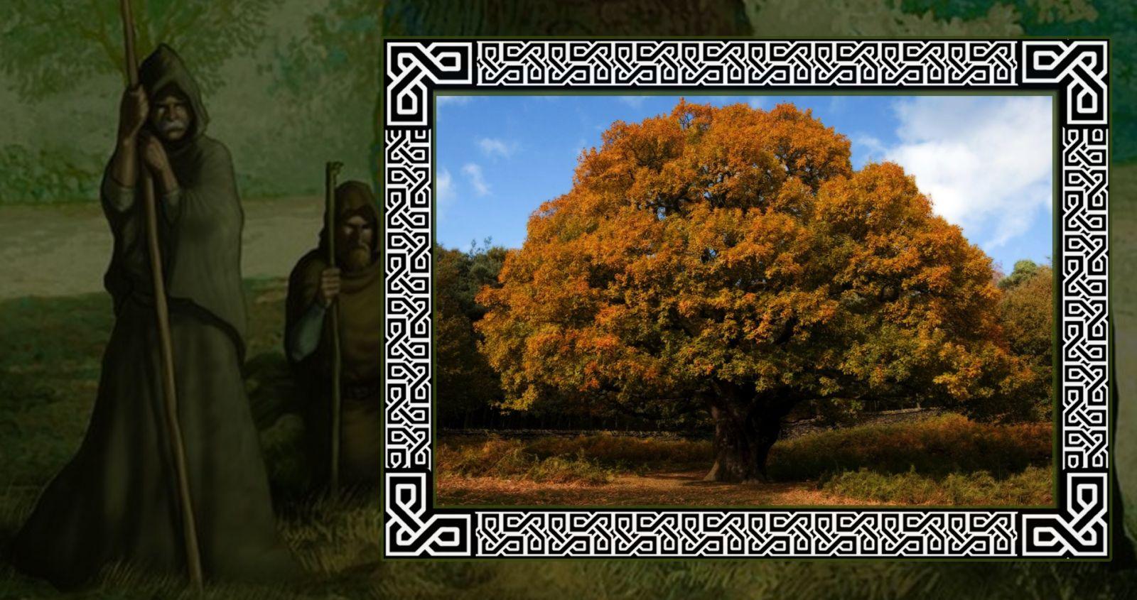 Благородный дуб в гороскопе друидов