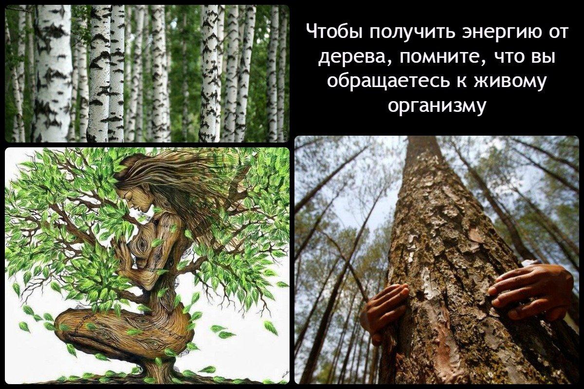 Существуют практики обмена энергетикой с деревьями